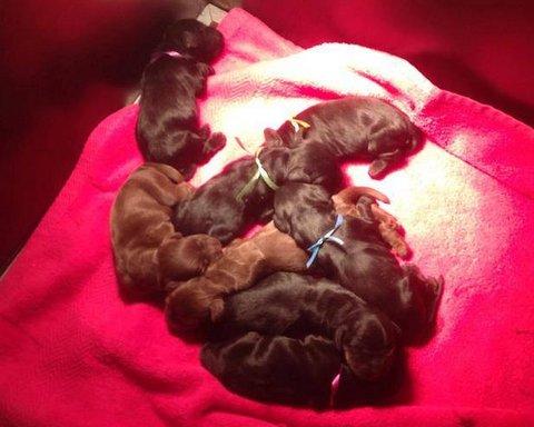 pups geboren op 1 oktober 2013