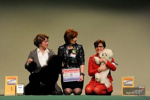hond van het jaar show 2012