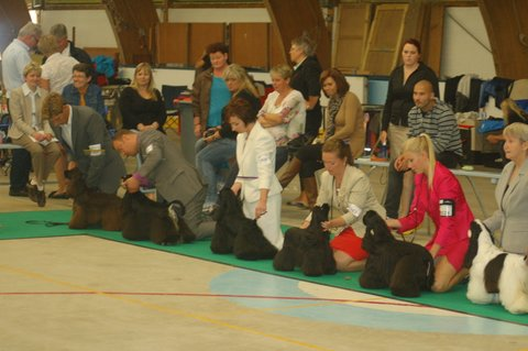 lola worlddogshow Paris 2011 .